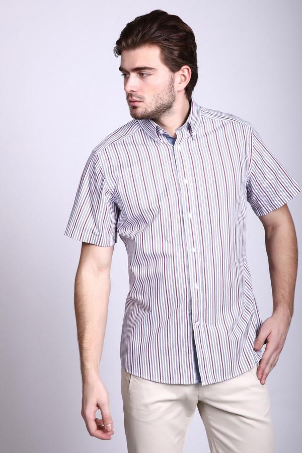 Мужские рубашки с коротким рукавом PezzoКороткий рукав<br>Мужская рубашка Pezzo в актуальную бежево-голубо-бордовую полоску. Отличный классический крой и красивый принт подчеркнет индивидуальность любого мужчины. Рубашка хорошо смотрится в casual-образе и благодаря натуральному составу очень комфортна в теплое время года. Может носиться также и на выпуск.